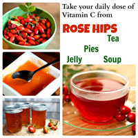 rose hips antioxidant tea